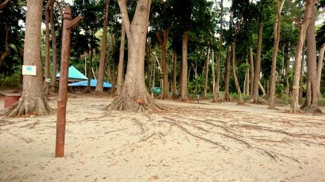 Radhanagar_beach (3)