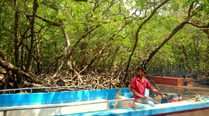 Baratang Island – Mangrove Creeks & Limestone Caves